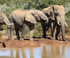 madikwe-game-reserve-project