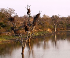 thornybush-nature-reserve-project