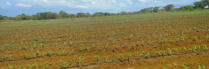 Maitjene agricultural operations