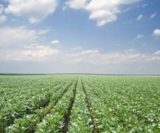 lusikisiki-regional-agricultural-development